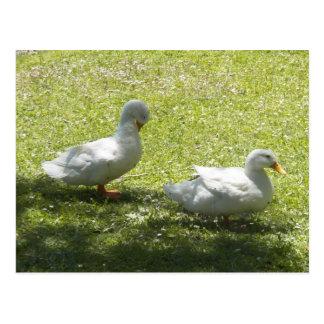 Rainbow Lake Ducks Postcard