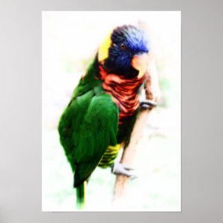 Rainbow Lorikeet Art Poster