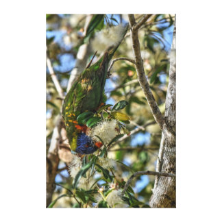 RAINBOW LORIKEET AUSTRALIA ART EFFECTS CANVAS PRINT