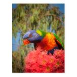 Rainbow Lorikeet, Australia Post Card