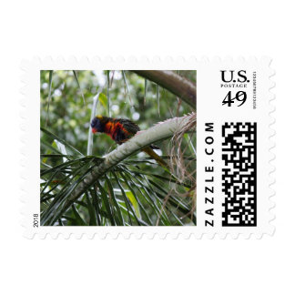 Rainbow Lorikeet Bird Postage Stamp