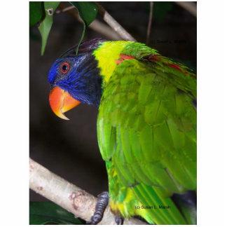 Rainbow Lorikeet Colourful parrot photograph Photo Cut Out