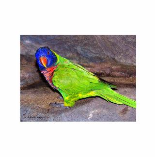 Rainbow Lorikeet parrot on rock wall, side view Photo Sculpture Magnet