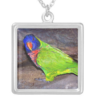 Rainbow Lorikeet parrot on rock wall, side view Square Pendant Necklace