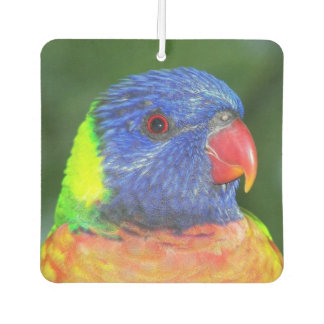Rainbow Lorikeet Photo Air Freshener