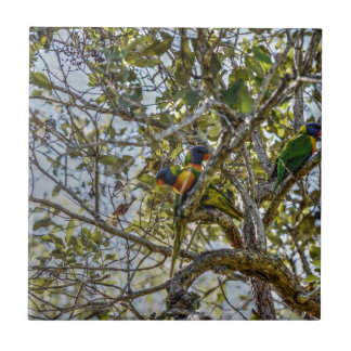 RAINBOW LORIKEET QUEENSLAND AUSTRALIA ART EFFECTS TILE