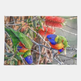 RAINBOW LORIKEET RURAL QUEENSLAND AUSTRALIA KITCHEN TOWEL