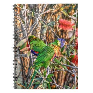 RAINBOW LORIKEET RURAL QUEENSLAND AUSTRALIA NOTEBOOK