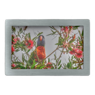 RAINBOW LORIKEET RURAL QUEENSLAND AUSTRALIA RECTANGULAR BELT BUCKLE