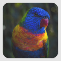 Rainbow Lorikeet Square Sticker