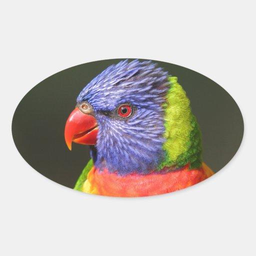 Rainbow Lorikeet Stickers