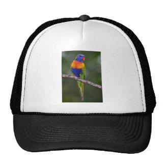 Rainbow Lorikeet Trichoglossus Haematodus Parrot Trucker Hat