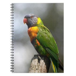 Rainbow Lorikeet (Trichoglossus haematodus Spiral Notebook