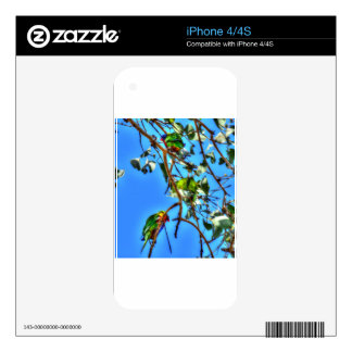 RAINBOW LORIKEETS AUSTRALIA WITH ART EFFECTS DECAL FOR iPhone 4S