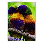 Rainbow Lorikeets, My Valentine Cards
