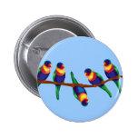 Rainbow lorikeets pinback buttons