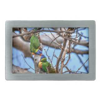 RAINBOW LORIKEETS RURAL QUEENSLAND AUSTRALIA RECTANGULAR BELT BUCKLE