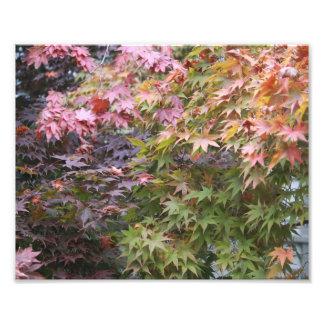 Rainbow Maple Photographic Print