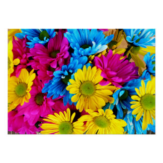 Rainbow of Daisies Poster