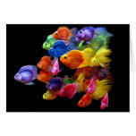 Rainbow of Parrotfish Greeting Cards