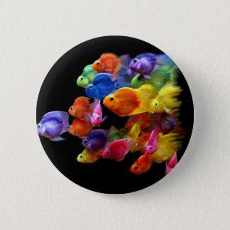 Rainbow of Parrotfish Pinback Button