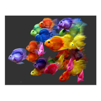 Rainbow of Parrotfish Postcard