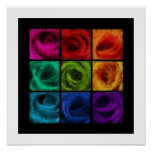 Rainbow of Roses Oil Posters