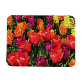 Rainbow Of Tulips Rectangular Photo Magnet