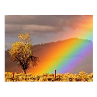 RAINBOW ON A COUNTRY ROAD WITH TREE POSTCARD
