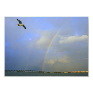 Rainbow over river bridge with seagull photo card