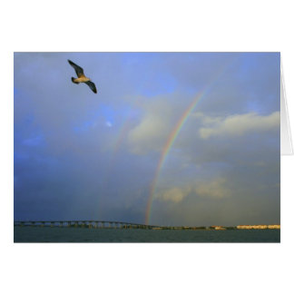 Rainbow over river bridge with seagull photo greeting card