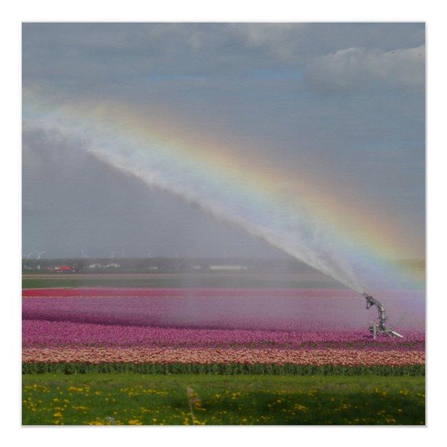 Rainbow over Tulips Field Poster