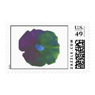 Rainbow Petunia Postage Stamp