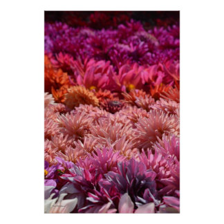 Rainbow Pink Orange Purple Dahlia Lover Flower Art Poster