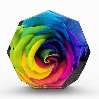 Rainbow Rose by JanLynn Award
