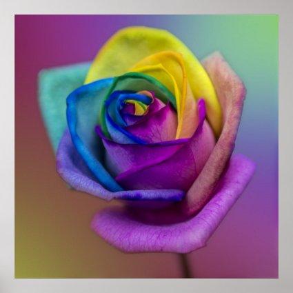 Rainbow Rose Flower Poster