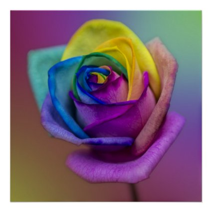 Rainbow Rose Flower Posters