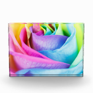 Rainbow Rose Macro Acrylic Print Award