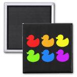 Rainbow Rubber Ducks on Black 2 Inch Square Magnet