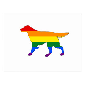 Rainbow Setter Postcard