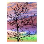 Rainbow Sky Barren Tree Postcard