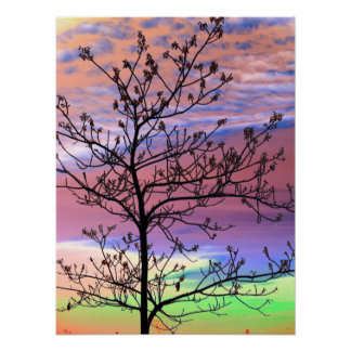 Rainbow Sky Barren Tree Poster