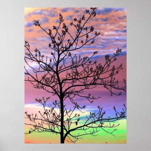Rainbow Sky Barren Tree Posters