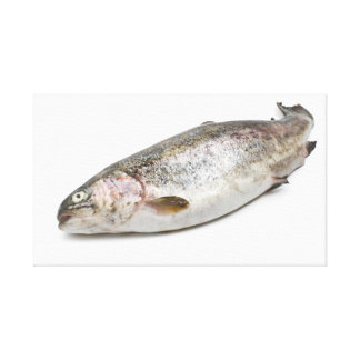 rainbow trout stretched canvas prints