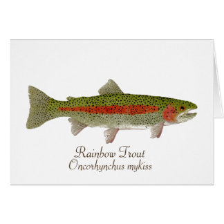 Rainbow Trout Card