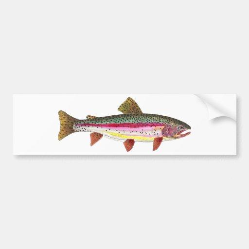 Rainbow Trout Fish Bumper Stickers