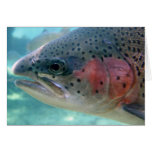 Rainbow Trout Greeting Cards