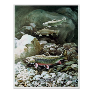 rainbow trout in brook fishing poster FROM 8.99