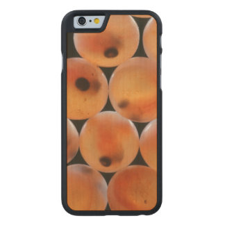 Rainbow Trout (Oncorhynchus Mykiss) Roe Carved Maple iPhone 6 Case