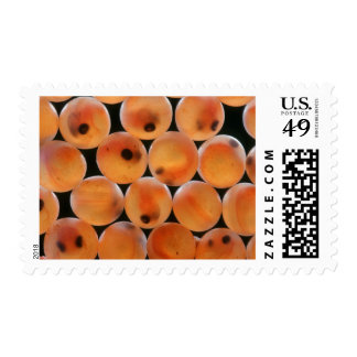Rainbow Trout (Oncorhynchus Mykiss) Roe Postage